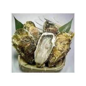 リアスビックワン(宮城三陸産殻付き牡蠣:成熟した二年〜三年牡蠣)特選Lサイズ5個+オイスターナイフ(お試しセット)