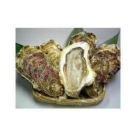 リアスビックワン(宮城三陸産殻付き牡蠣:成熟した二年〜三年牡蠣)キングサイズ25個(3〜4名様にオススメ)ナイフが付かないリピーター様向けのセットです
