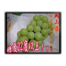 【2017年即日出荷可能果物】新品種ぶどう!!岡山県産シャインマスカット1ケースセット