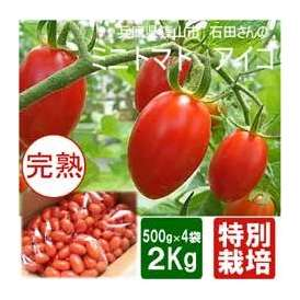 【丹波篠山産・産地直送】完熟ミニトマト 高糖度の「アイコトマト」たっぷり2キロ ■送料無料