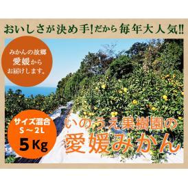 いのうえ果樹園の無選別みかん5キロ