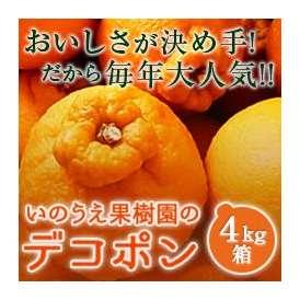 愛媛県産しらぬい(デコポン)4kg産地農家さんより直送新鮮美味しさに大満足