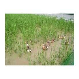 アイガモが育てた無農薬の「アイガモ米」 コシヒカリ 玄米5kg