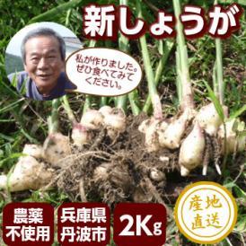 新生姜 国産新しょうが2キロ【農薬を使わず有機肥料で栽培】