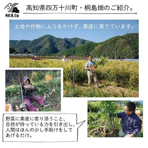 桐島畑のジンジャーシロップ 480g入り 高知県四万十川町産しょうが 生姜シロップ しょうがシロップ03