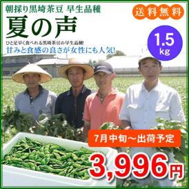 【予約販売】【7月中旬~7月下旬出荷】甘みと食感の良さが女性にも人気の黒埼茶豆「夏の声」1.5kg