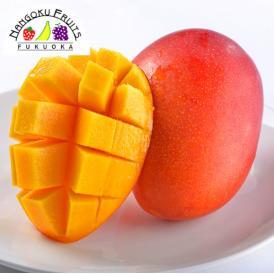 南国フルーツ・宮崎産完熟マンゴ-Mサイズ2玉
