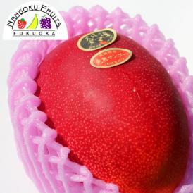 南国フルーツ・宮崎産完熟マンゴ-太陽のタマゴ2L2玉