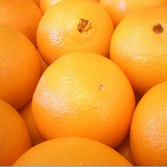 南国フルーツ・オーストラリア・アメリカ産オレンジS10玉02