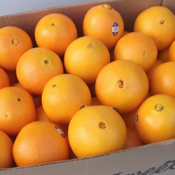 南国フルーツ・オーストラリア・アメリカ産オレンジS30玉03