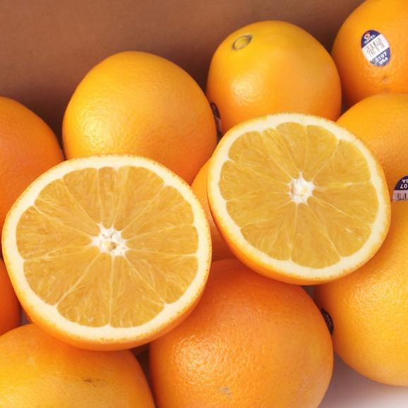 南国フルーツ・オーストラリア・アメリカ産オレンジS30玉04