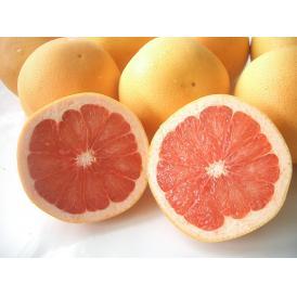 南国フルーツ・南アフリカ産グレープフルーツ ルビー中玉18-20玉