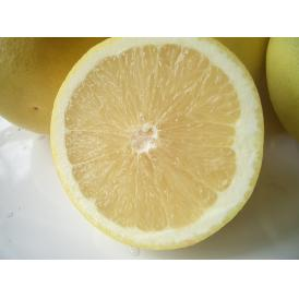 南国フルーツ・南アフリカ産グレープフルーツ ホワイト12-13玉