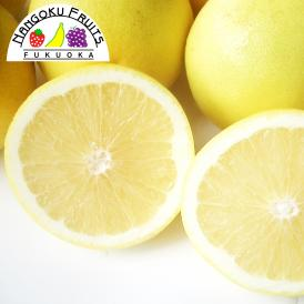南国フルーツ・南アフリカ産グレープフルーツ ホワイトL10玉