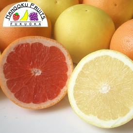 南国フルーツ・南アフリカ産グレープフルーツ・ルビー&ホワイトM10玉
