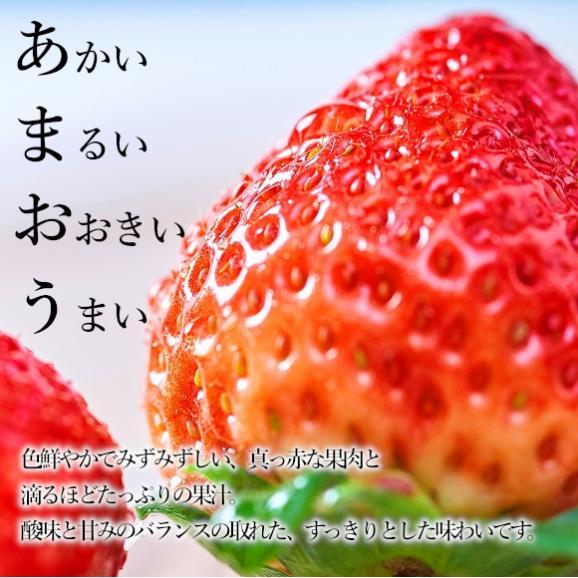 南国フルーツ・福岡産あまおう苺デラックス2パック 02