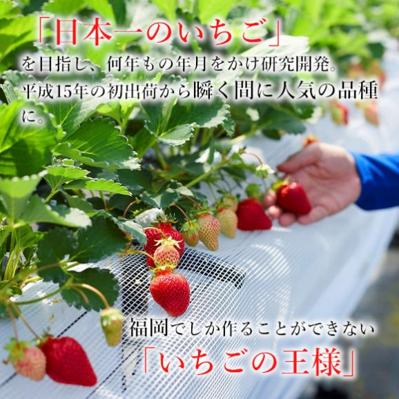 南国フルーツ・福岡産あまおう苺デラックス2パック 03