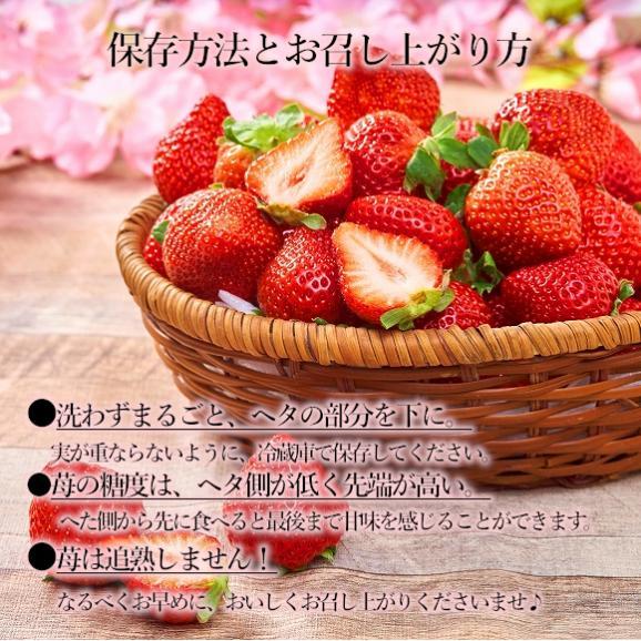 南国フルーツ・福岡産あまおう苺デラックス2パック 04