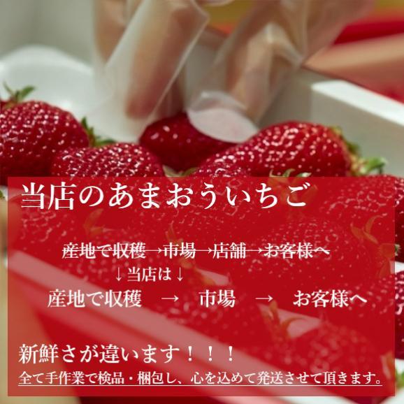 南国フルーツ・福岡産あまおう苺デラックス2パック 05