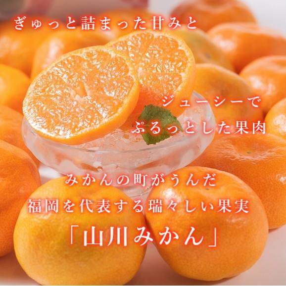 南国フルーツ・福岡産山川みかん 2kg箱 03