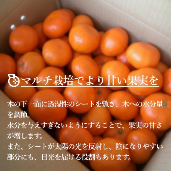 南国フルーツ・福岡産山川みかん 2kg箱 04