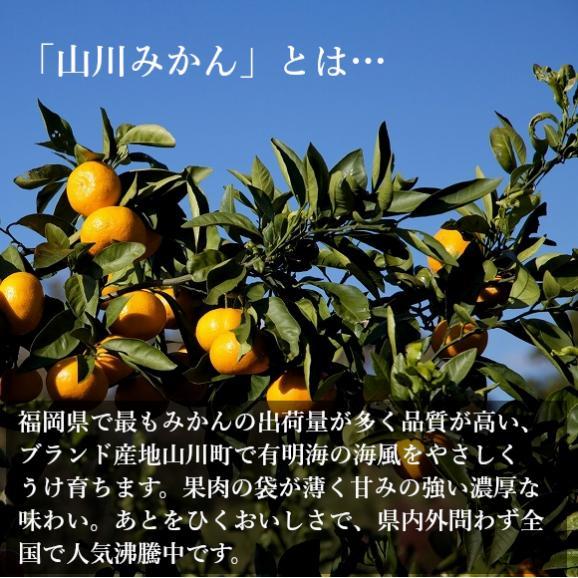 南国フルーツ・福岡産山川みかん 2kg箱 05