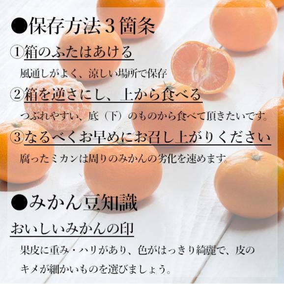 南国フルーツ・福岡産山川みかん 2kg箱 06