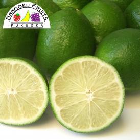 南国フルーツ・メキシコ産ライム1kg