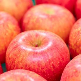 南国フルーツ・長野産つがる林檎20玉