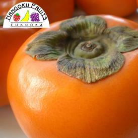 南国フルーツ福岡産富有柿 約5kg(16~20玉)