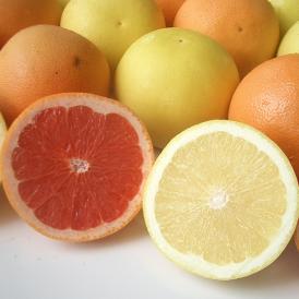 南国フルーツ・フロリダ産紅白グレープフルーツ大10玉