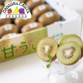 南国フルーツ【予約販売】福岡産キウイ・甘うぃ約1.5kg箱