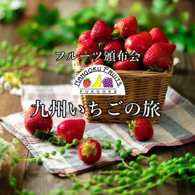 【頒布会3ヶ月コース】「九州いちごの旅」【3,780円/1か月あたり】【送料無料】