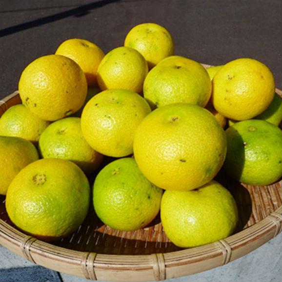 【送料無料】幸せの黄色いへべす(有機へべす) 【5キロ】01