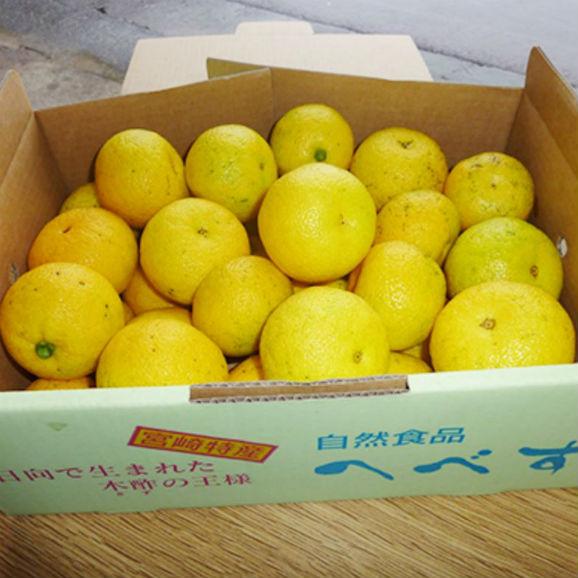 【送料無料】幸せの黄色いへべす(有機へべす) 【5キロ】02