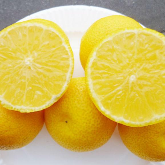【送料無料】幸せの黄色いへべす(有機へべす) 【5キロ】03