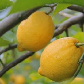 『低農薬レモン』3kg