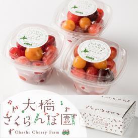 さくらんぼを急速冷凍することで糖度の高い完熟さくらんぼをお届けします!