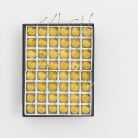 黄色いさくらんぼ「月山錦スペシャル(48粒)」 7月下旬より発送開始 がっさんにしき