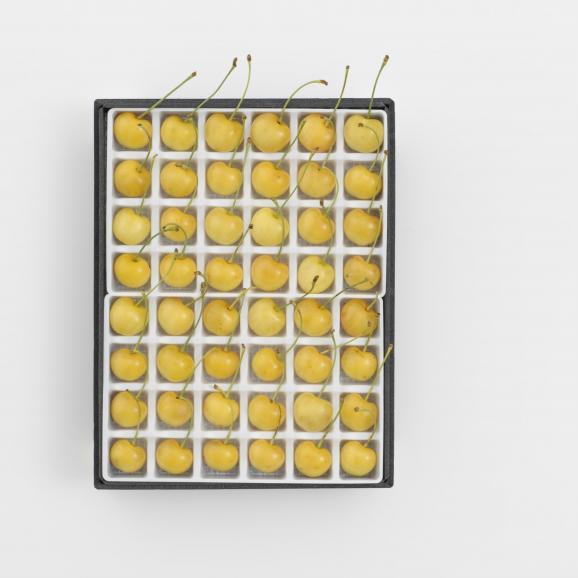 黄色いさくらんぼ「月山錦スペシャル(48粒)」 7月下旬より発送開始※着日指定不可01