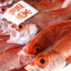 【数量期間限定】 鮮魚 のどぐろ(1尾・200~240g) ※漁の状況次第で販売中止、また追加販売いたします