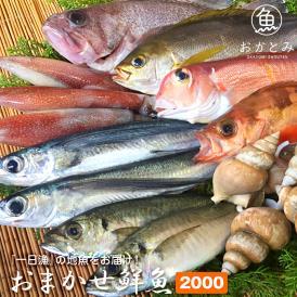 【一日漁】夏のおまかせ鮮魚2,000円(送料別途)※画像はイメージです。
