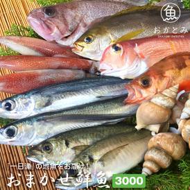 【一日漁】夏のおまかせ鮮魚3.000円(送料別途)