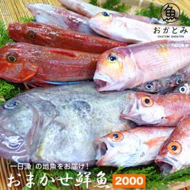 【一日漁】秋のおまかせ鮮魚2.000円(送料別途)※画像はイメージです。