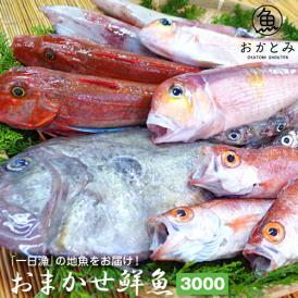 【一日漁】秋のおまかせ鮮魚3.000円(送料別途)※画像はイメージです。