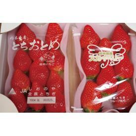 栃木県矢板市から心を込めて育てたいちごをお届けします。IPM栽培で化学農薬に依存しないいちごづくり。