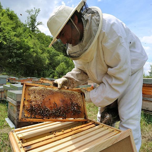 オラヤミエル クリーム蜂蜜(ユーカリ) 450g03