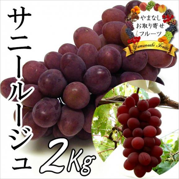 山梨産ぶどう サニールージュ 特選 2Kg ※お届け予定:8月下旬から01