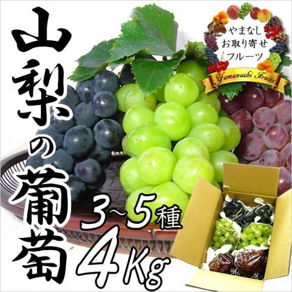 山梨産ぶどう 3~5種お任せ詰め合わせ 4Kg ※お届け予定:9月から01