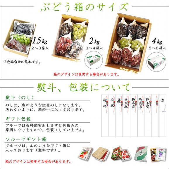 山梨産ぶどう 藤稔(ふじみのり) 特選 4Kg ※お届け予定:8月下旬から04